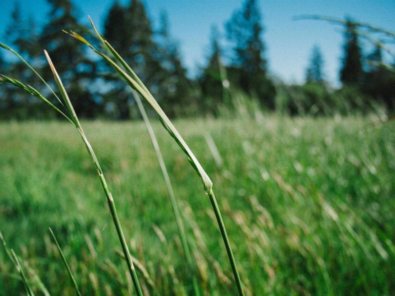 La casa naturale: la bioedilizia per dare ossigeno a nuovi modi di abitare