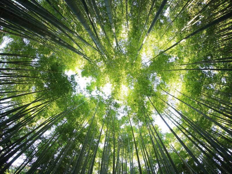 Bioarchitettura: le fondamenta di una scelta etica