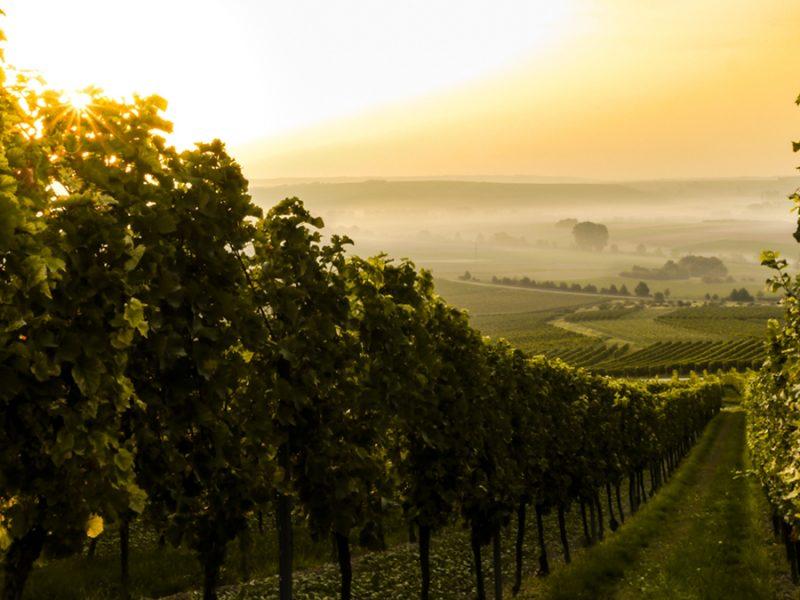 La Cantina come spazio da vivere. Nuovo ossigeno per il settore vitivinicolo.