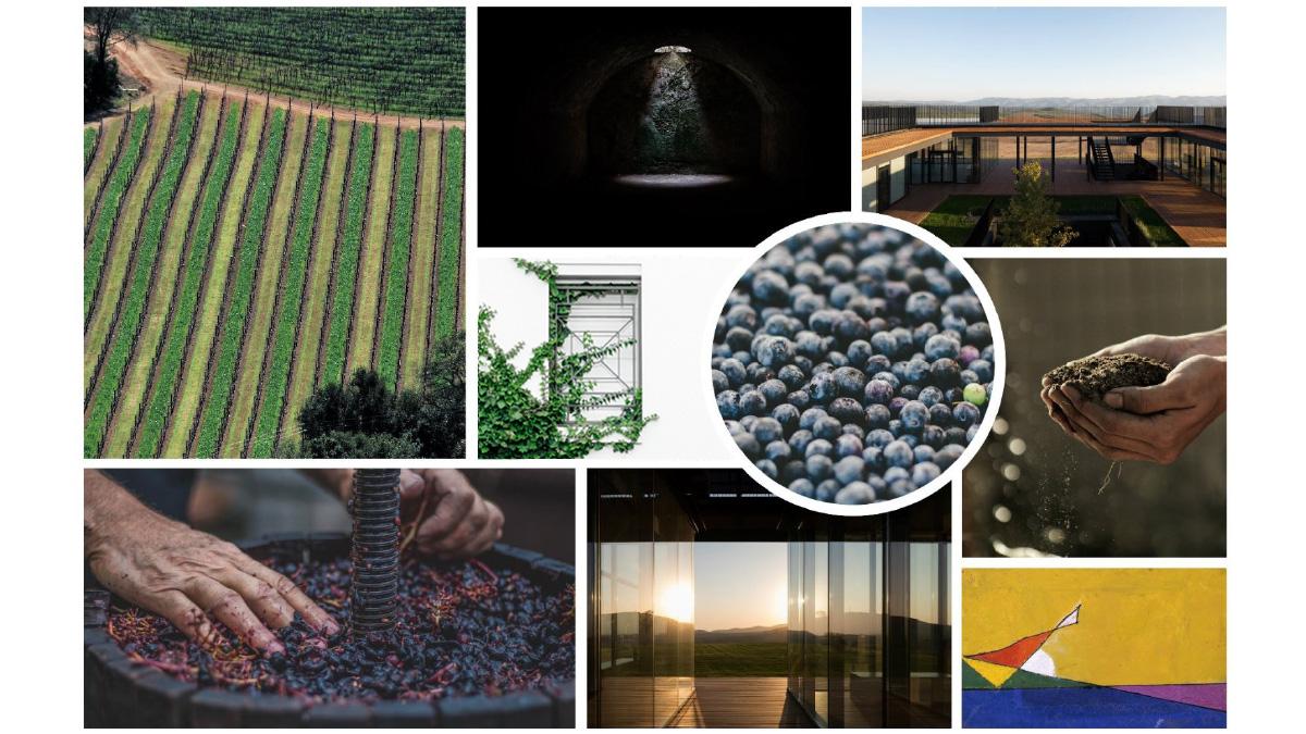 Nuovo ossigeno per il settore vitivinicolo | Ossigeno